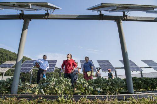 Hommes observant des panneaux solaire dans un champ photovoltaïque